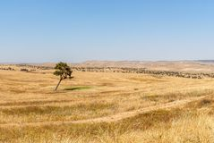 Lonely tree, Negev Desert Stock Photo