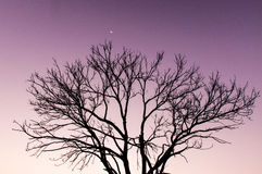 Lonely tree. The lonely tree at night Stock Images