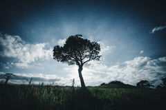 A lonely Tree at night. Cathedral Cove New Zealand royalty free stock images