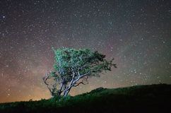 Lonely tree at night. Night landscape lone tree on a background of the starry sky Royalty Free Stock Image