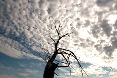 The lonely tree. Old dry tree against a cloudy sky Stock Images