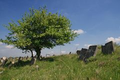 Lonely tree on old Jewish cemetery. The Jewish Cemetery in Satanov (Ukraine) is situated upon a hill, above the Zbruch River, and its dimensions are 1,200 m. x Royalty Free Stock Photo