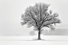 Free Lonely Tree On A Field .Lithuania Landscape Stock Photos - 113438893
