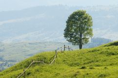 Lonely Tree On A Hill Royalty Free Stock Images