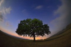 Free Lonely Tree On Field At Dawn Stock Photos - 43099923