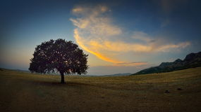Free Lonely Tree On Field At Dawn Stock Photography - 43099982