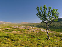 Lonely Tree On The Hill Royalty Free Stock Photo