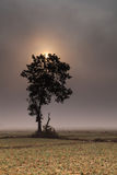A lonely  tree and onion fields Stock Photography