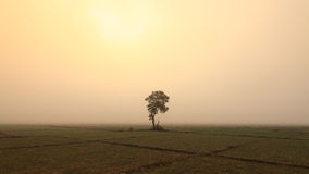 A lonely  tree and onion fields Royalty Free Stock Photography