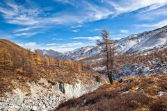 Lonely tree over mountain river Stock Image