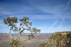 Lonely tree over a precipice Stock Photography