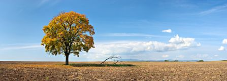 Lonely tree panorama Stock Photo