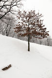 Lonely tree . park. A deciduous tree in winter. covered by snow Stock Photo