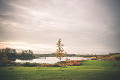Lonely tree in a park by a lake. In the fall with golden autumn colors in the sunset Royalty Free Stock Photos