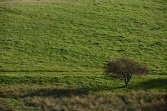 Lonely tree on pasture Stock Images