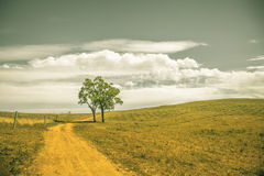 Lonely tree and pastures in the highlands landscape Stock Photography