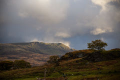 Lonely tree on the peak in Snowdonia. Lonely tree standing on the peak in Snowdonia Royalty Free Stock Photography