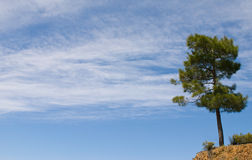 Lonely tree and blue sky Royalty Free Stock Photo