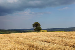 The lonely tree in the pole. Lone tree in the middle of agricultural land Stock Image