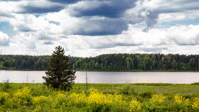 Lonely tree at a pond on a summer day.  Stock Images