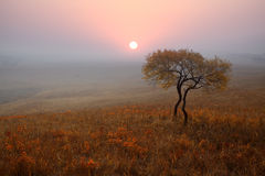Lonely tree on the prairie in autumn. Of the morning Stock Photo