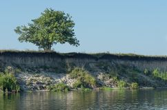 A lonely tree on a precipice above the river Royalty Free Stock Image