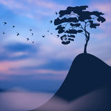 Lonely tree on a precipice. Sunset blurred landscape: lonely tree on a precipice, and a flock of birds Stock Photo