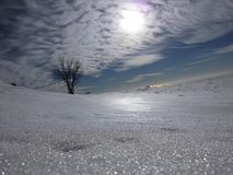 A lonely tree puts sun and snow at a distance Stock Image