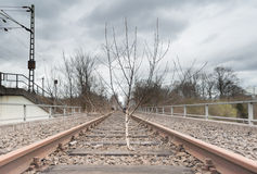 Lonely Tree on Railway Track in Muenster Royalty Free Stock Images