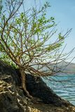 Lonely tree raised on the rock. The power of life Royalty Free Stock Photography