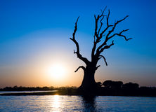 Lonely tree on a river Stock Image