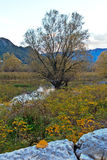 Lonely tree on the river. Autumn landscape: tree on a background of mountains Royalty Free Stock Photos