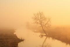 Lonely tree on the river in morning mist Royalty Free Stock Images