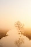 Lonely tree on the river in morning mist Royalty Free Stock Image