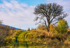 Lonely tree by the road in autumn morning Royalty Free Stock Photo