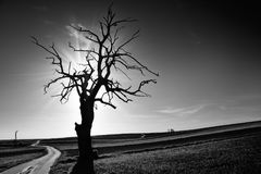 Lonely tree by the road. Black and white. Poland stock photo