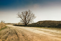 Lonely tree on the road. Stock Images