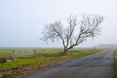 Lonely tree by road in fog Stock Images