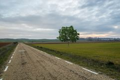 Lonely tree on a road at sunset. Soria royalty free stock images