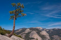Lonely tree on a rock. A tree in Yosemite National Park Stock Images
