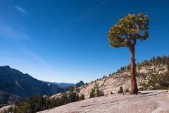 Lonely tree on a rock. A tree in Yosemite National Park Stock Photo