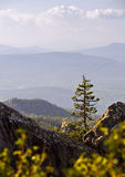 Lonely tree on a rock. Russia, South Ural, Lonely tree on a rock of Malinovaya mountain near Beloretsk Royalty Free Stock Image