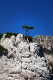 Lonely tree on the rock at calanque in France Royalty Free Stock Photo