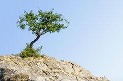 Lonely tree on a rock Royalty Free Stock Photography