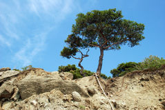 Lonely tree on rocks. Lonely tree on cliff rocks Stock Image