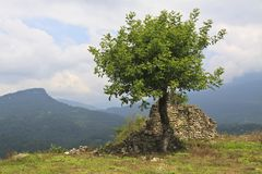 Lonely tree and ruins on mountain Royalty Free Stock Photo