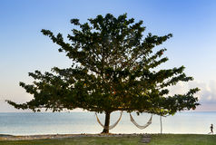 Lonely tree and Running woman Stock Images