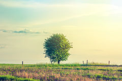 Lonely tree on a rural meadow Stock Image