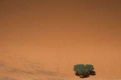 Lonely tree on the sand dune. Sossusvlei, Namibia Royalty Free Stock Photo