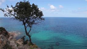 Lonely tree and sea on Akamas peninsula Cyprus. stock video